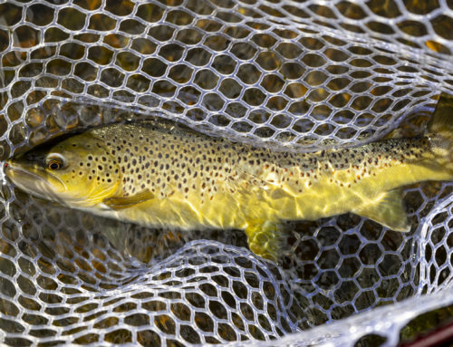3 Reasons Why November is an Awesome Time to Chase Trout